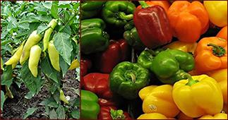 Картинки по запросу перец овощной